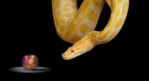 Existenzgründung Wissen – Nachvertragliches Wettbewerbsverbot
